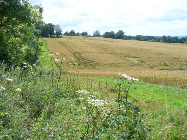 Wheatfield on the North Downs