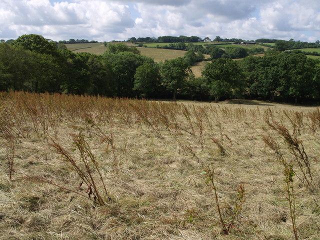 Field near Landsend Farm