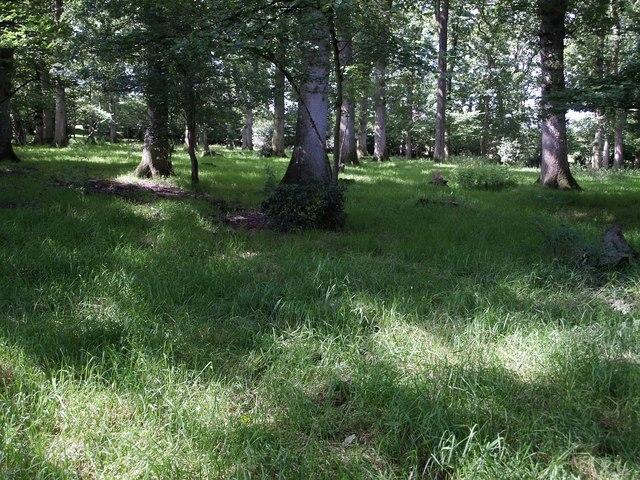 Birches Copse