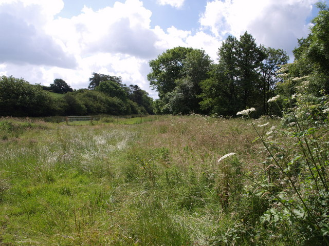 Meadow by the West Lew