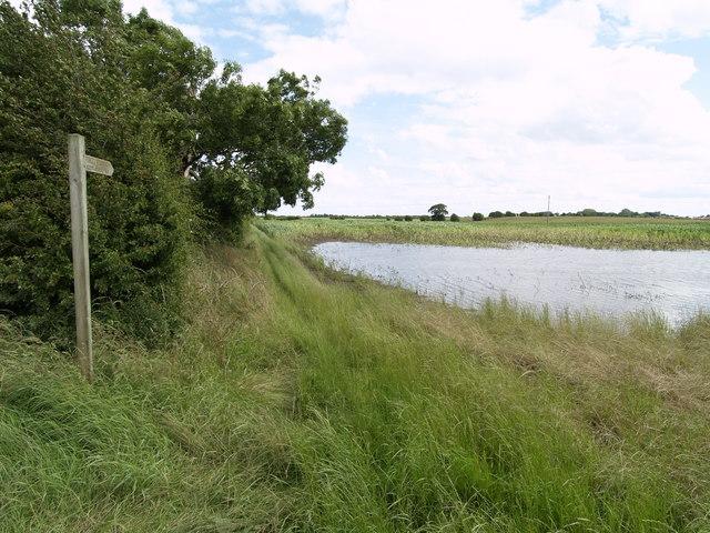 New Pond?