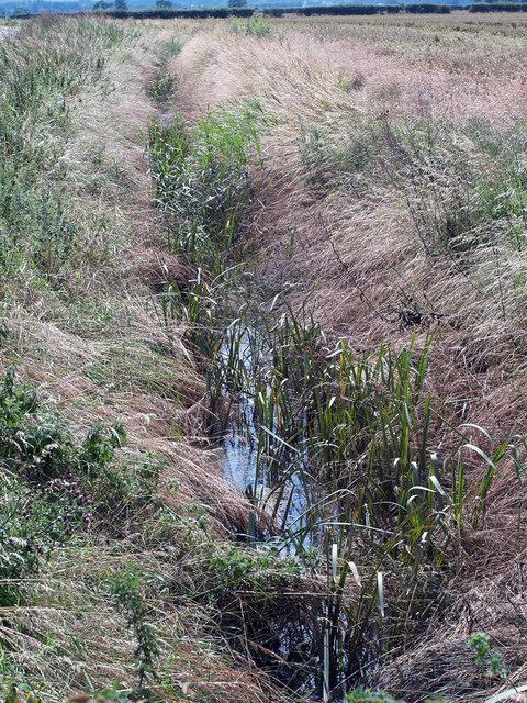 Ditch along Carr Lane, Bonby