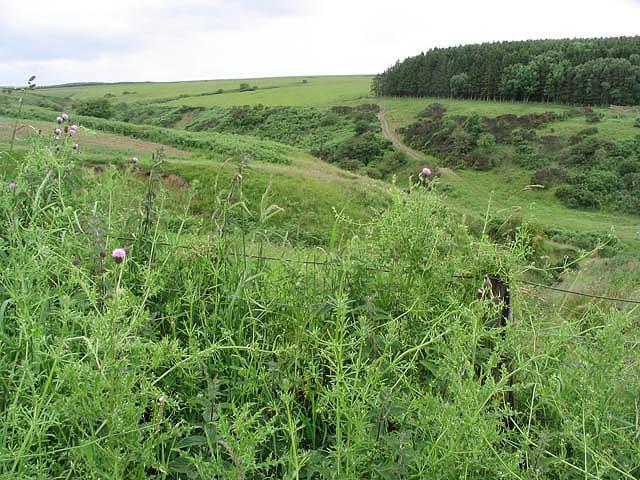 Farmland at Hallrule Burn