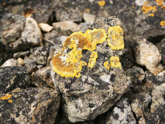 Lichen on Ancaster limestone wall
