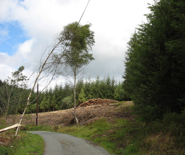 Log pile in clear fell area