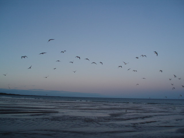 Flocking Birds at Sunset