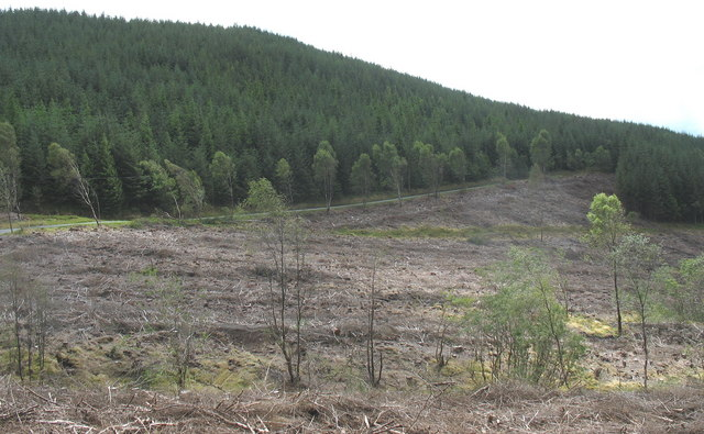 Forestry clear fell