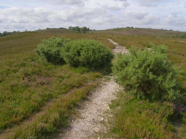 Path to the east of Strodgemoor Bottom, Vales Moor, New Forest