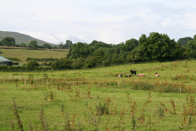 Horses on rough pasture