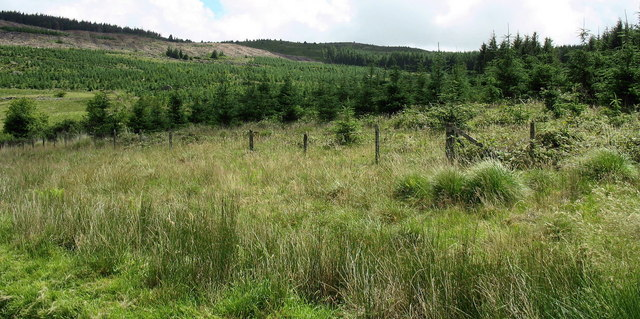 Rough grazing and forest on the Hafod Fraith Estate