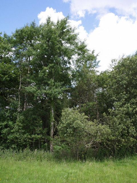 Trees alongside Stewdon Moor