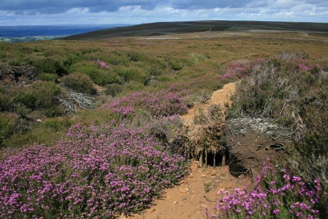Animal Trap on Peat Moss