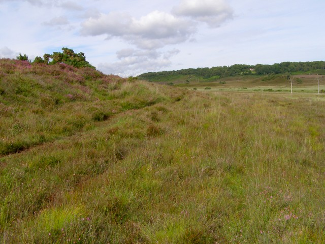Edge of dry heath, Cranes Moor, New Forest
