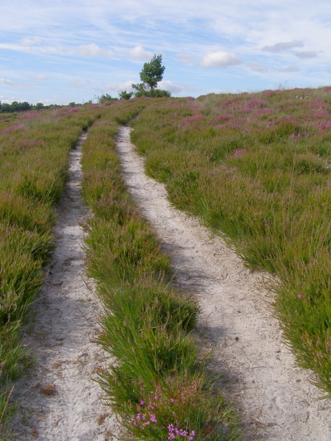 Track to the east of Strodgemoor Bottom, New Forest