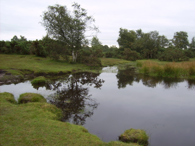 Pond on Cadnam Common