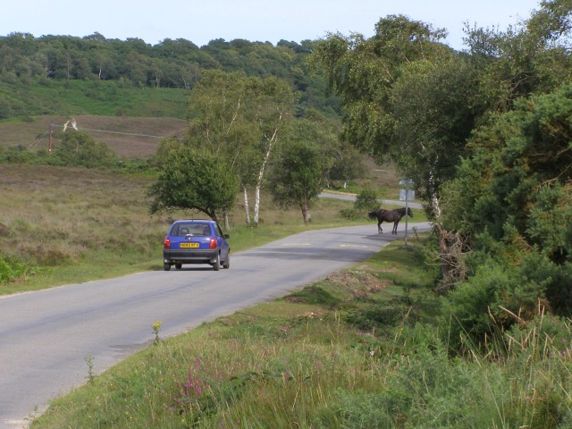 Pony on the road across Vales Moor, New Forest