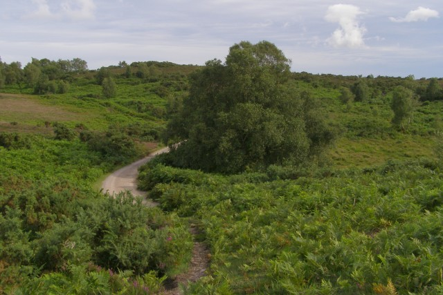 Vales Moor, New Forest
