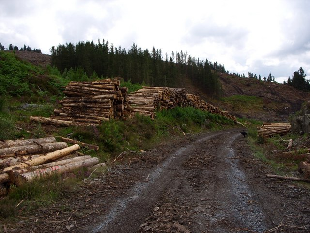 Timber stack on unmapped forest road