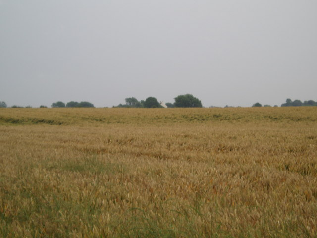 Over the fields to Sandhill Farm