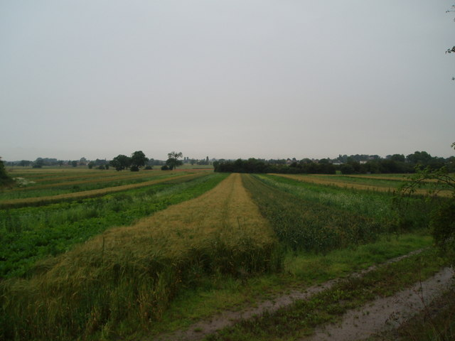 Strip Farming near Churchtown
