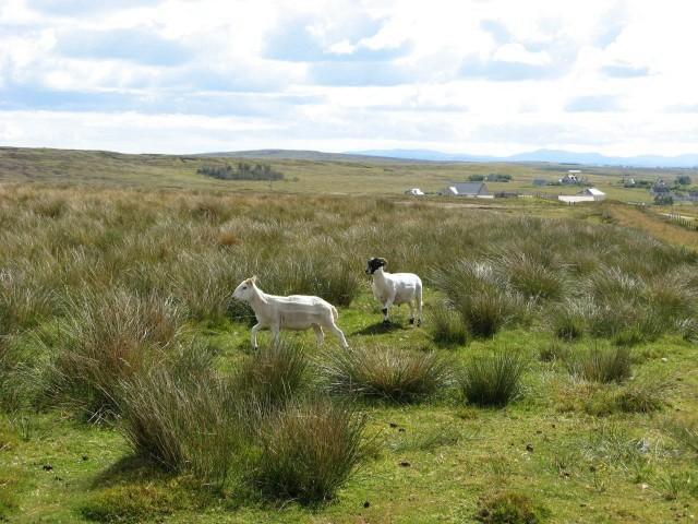 Rough grazing near Garrabost