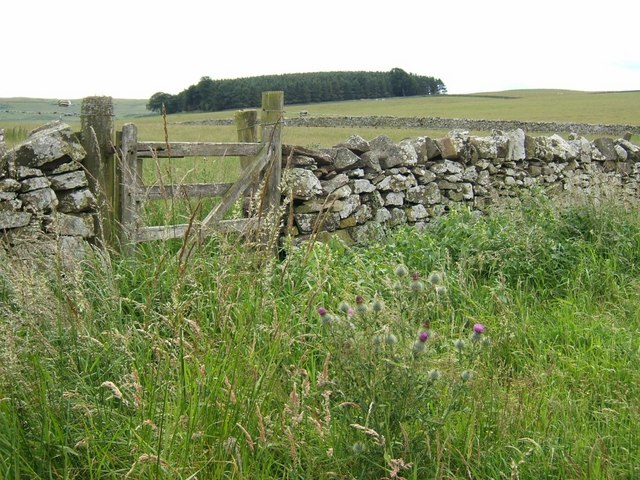 Dry stane dyke, gate and Tanlaw Woods
