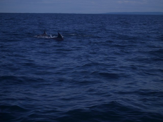 Moray Firth: Two dolphins, north east of Rosemarkie / Fort George