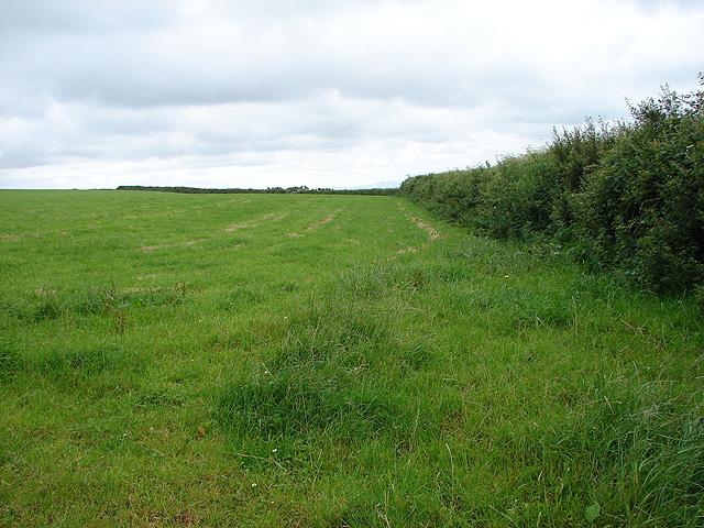 Field near Hendra