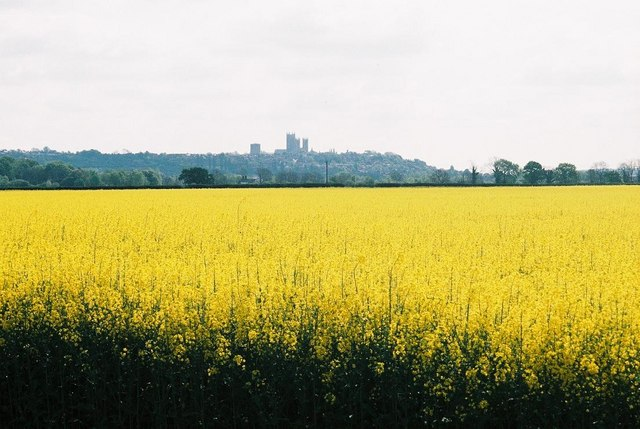 Yellow field and cathedral view
