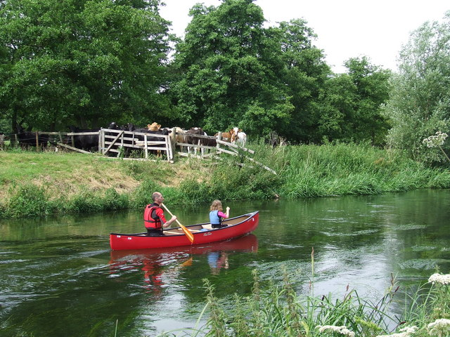 Cows And Canoeist