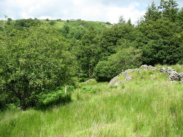 Wooded hillside above the Mawddach