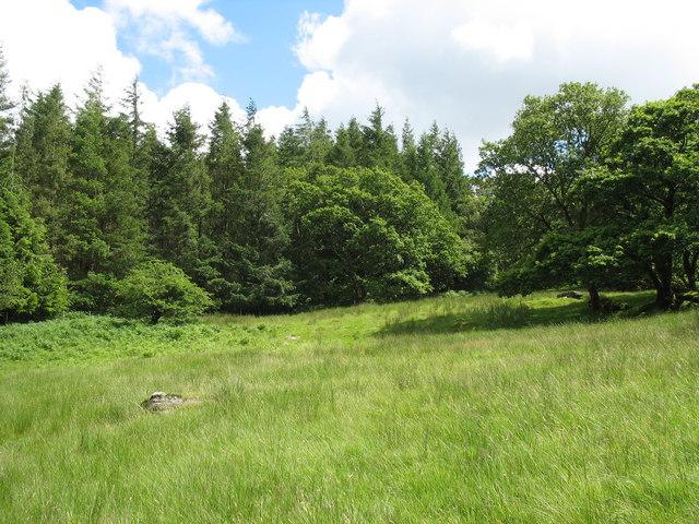 Field and forest immediately south of the Tyddyn-mawr bridge