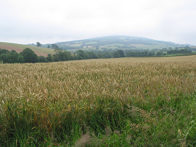 View across the wheat to May Hill