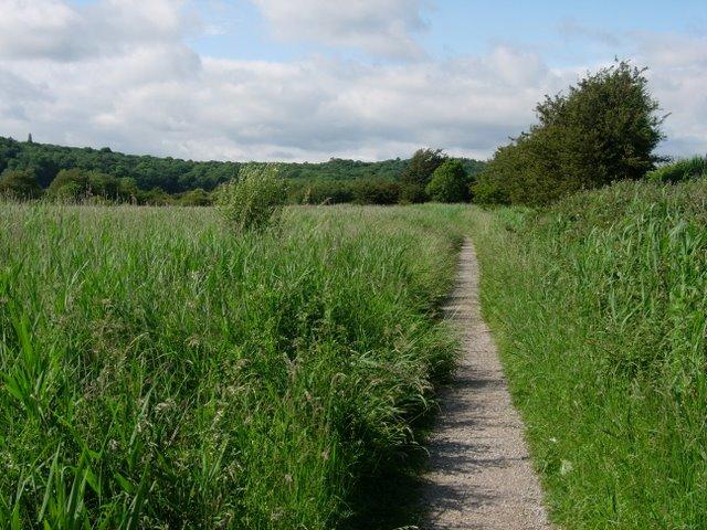 Path through reeds