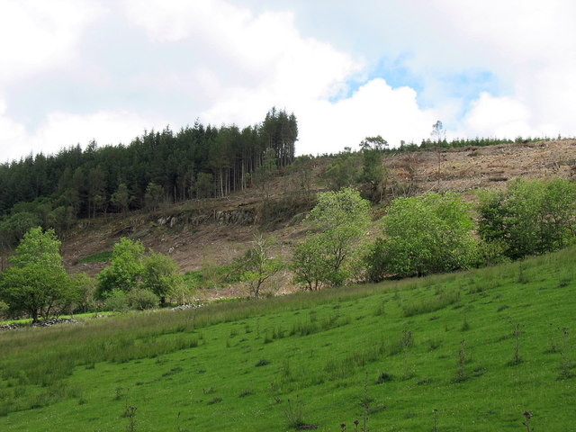 Clear fell in the Hafod Fraith private woodlands
