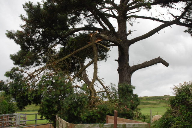 Damaged Tree, Brighstone