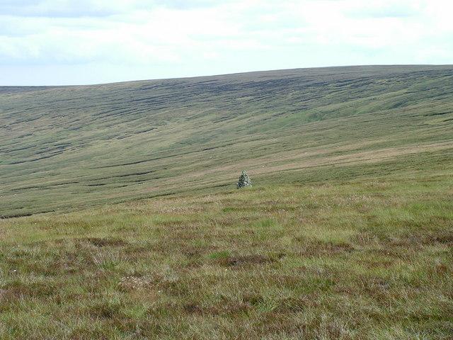 Currick on Westernhope Moor