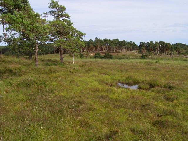 Boggy heathland, Cranes Moor, New Forest