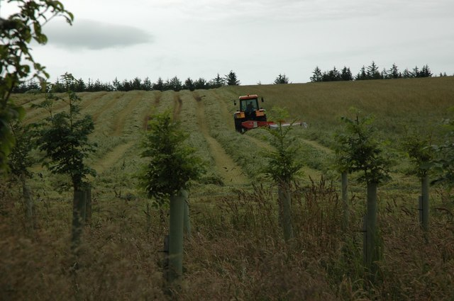 Silaging West of Greystoke Forest
