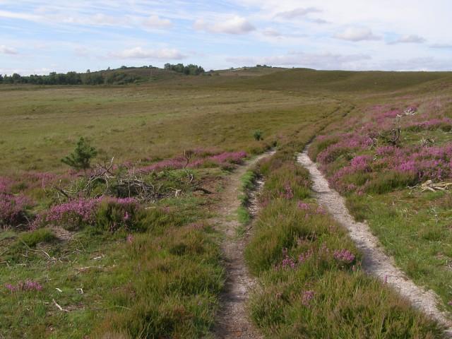 Heathland track east of Strodgemoor Bottom, New Forest