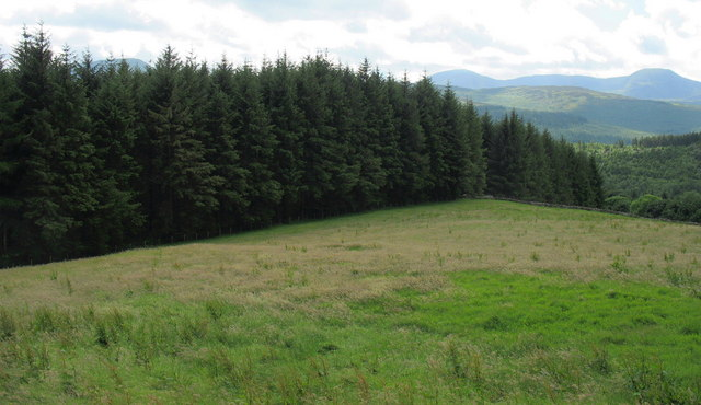Rough grazing and forest at Gwynfynydd