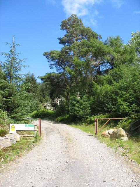 Main drive into the Mynydd Gwynfynydd Private Forest