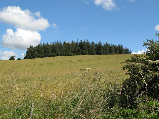 Arable land and plantation near Newton