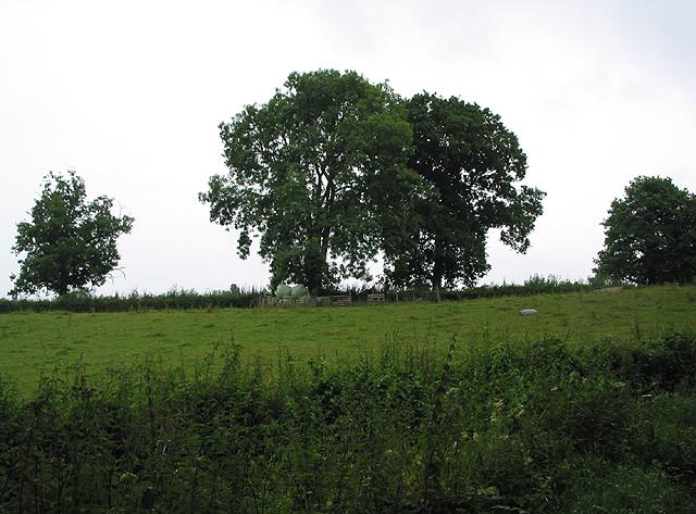 Pasture near Great Giles Farm