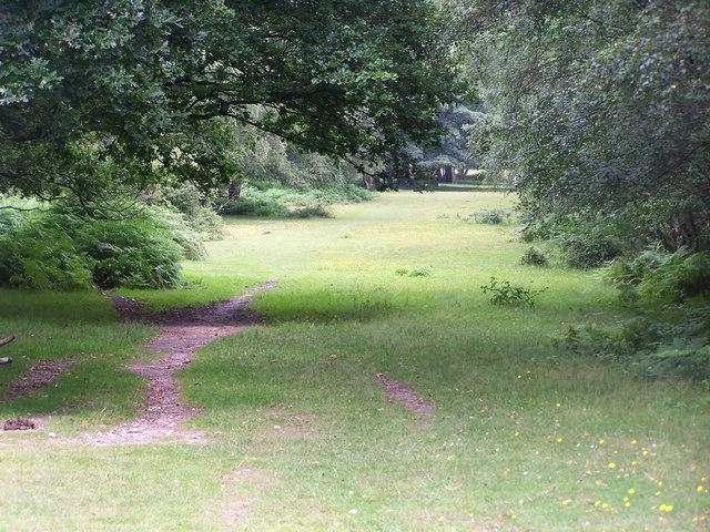 Forest path, Blackhill