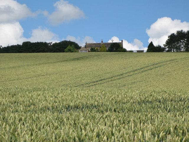 Arable land below Dipton Cottage