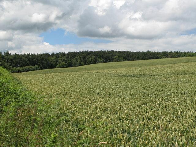 Arable land below Dipton Cottage (2)