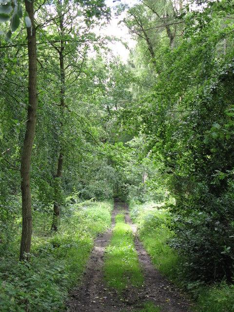 Track in Dipton Wood