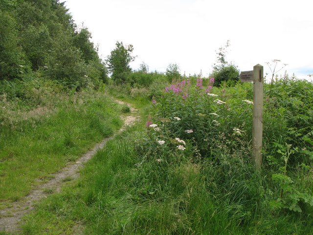 Bridleway to Seventy Acre Wood