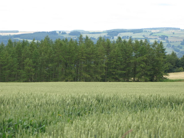 Arable land and woods, Corbridge Common